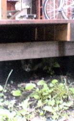 我が家を取り囲む野良猫さん達の話。_d0028589_18512981.jpg