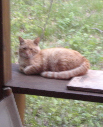 我が家を取り囲む野良猫さん達の話。_d0028589_18553372.jpg