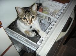 我が家を取り囲む野良猫さん達の話。_d0028589_18585010.jpg