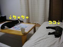 c0032073_220582.jpg