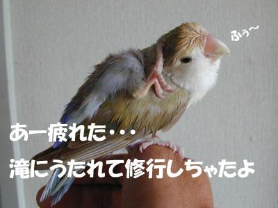 d0010868_16463738.jpg