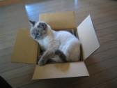 猫嫌いなおばあさんのお引越し_c0006826_6442081.jpg