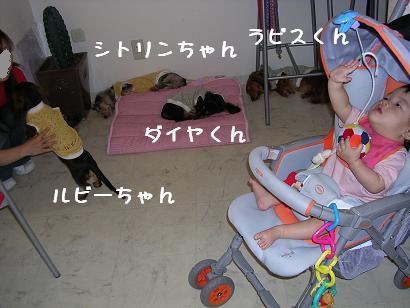 c0057451_20325179.jpg