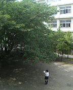 d0065116_1615302.jpg