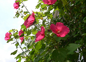 空と花と_c0069048_526254.jpg
