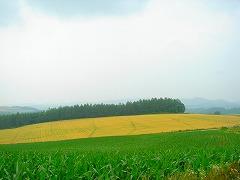 d0012285_0474925.jpg