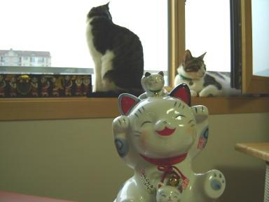 まだまだいます、癒し猫♪_d0037284_21365596.jpg