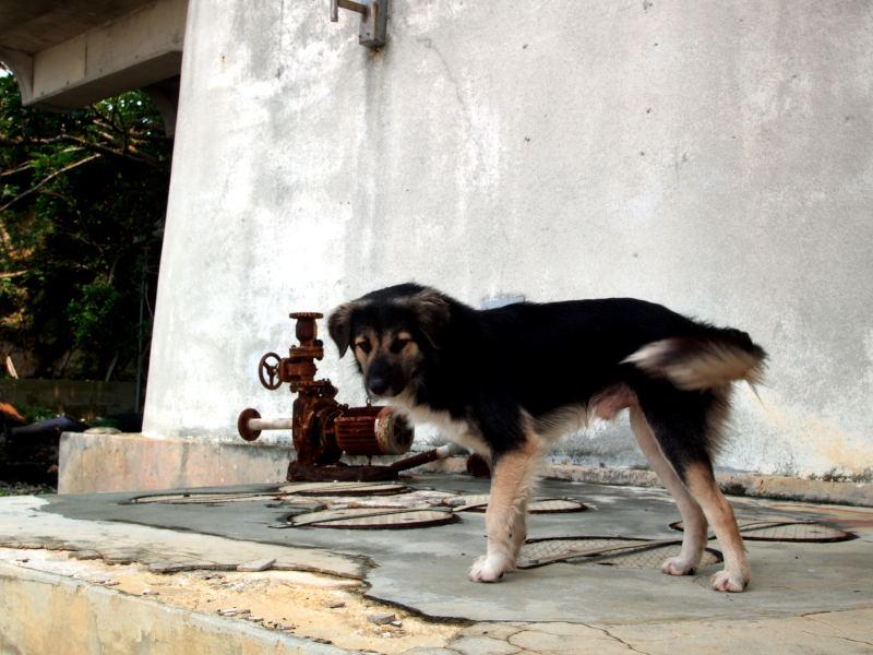 伊良部の犬と宮古の猫_e0004009_011512.jpg