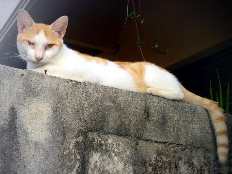 伊良部の犬と宮古の猫_e0004009_024568.jpg