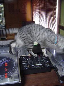 おかげでプレイヤーのフタ、猫の爪あとだらけ…。