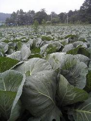 高原のお野菜、ポツポツと。_d0028589_19115241.jpg
