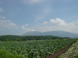 高原のお野菜、ポツポツと。_d0028589_1920475.jpg
