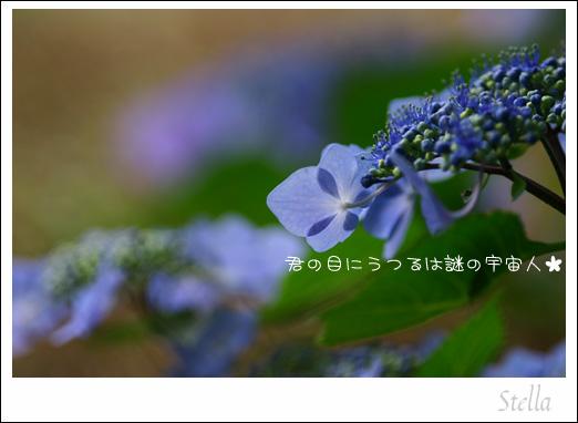 d0015026_9503882.jpg