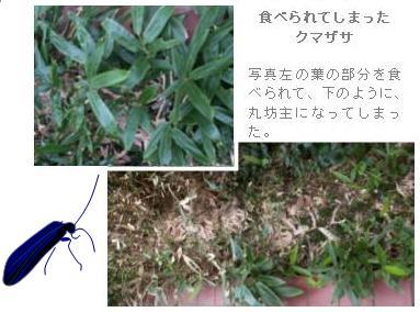 c0039924_2012567.jpg