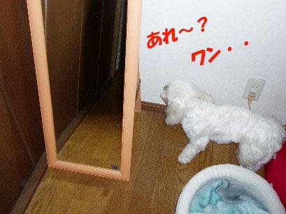 b0060071_044047.jpg