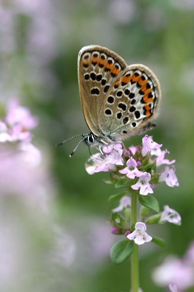 お庭に咲く花・・・ レモンタイムと訪問者たち_c0048494_0562537.jpg