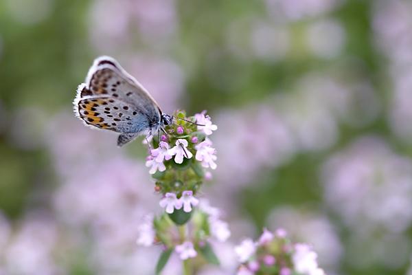 お庭に咲く花・・・ レモンタイムと訪問者たち_c0048494_0572381.jpg