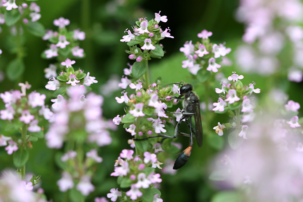 お庭に咲く花・・・ レモンタイムと訪問者たち_c0048494_0581252.jpg