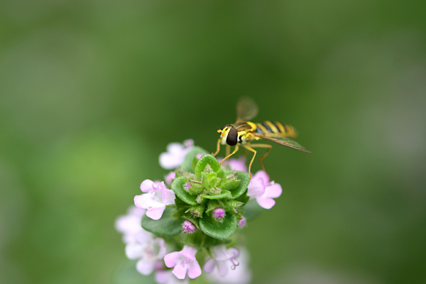 お庭に咲く花・・・ レモンタイムと訪問者たち_c0048494_0594832.jpg