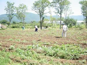 日本の畑を耕したい 3_d0063218_104301.jpg