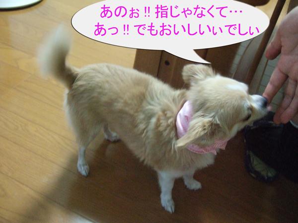 b0042950_221034100.jpg