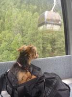 スイス&フランス旅行 ~シャモニ(Chamonix)~_c0024345_2144883.jpg