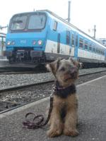 スイス&フランス旅行 ~犬の交通費~_c0024345_21542886.jpg