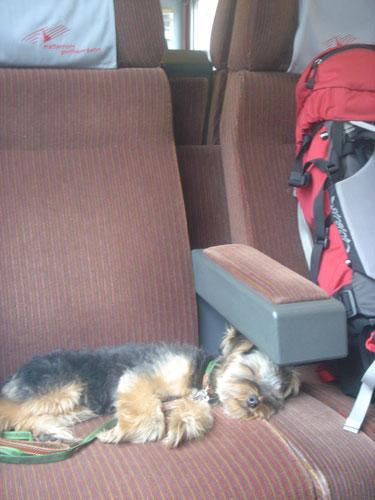 スイス&フランス旅行 ~犬の交通費~_c0024345_2222921.jpg