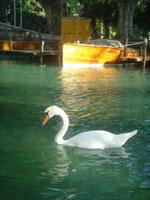スイス&フランス旅行 ~アヌシー(Annecy)~_c0024345_704237.jpg