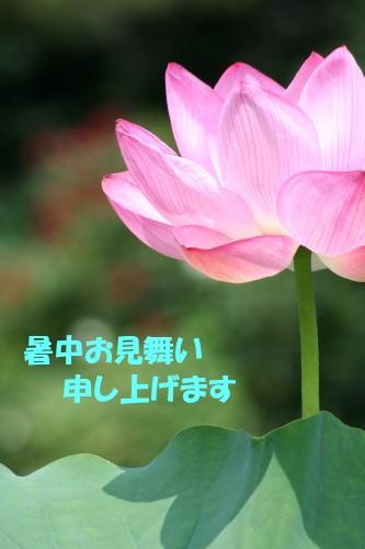 c0044199_1001946.jpg