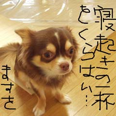 c0036617_7571089.jpg