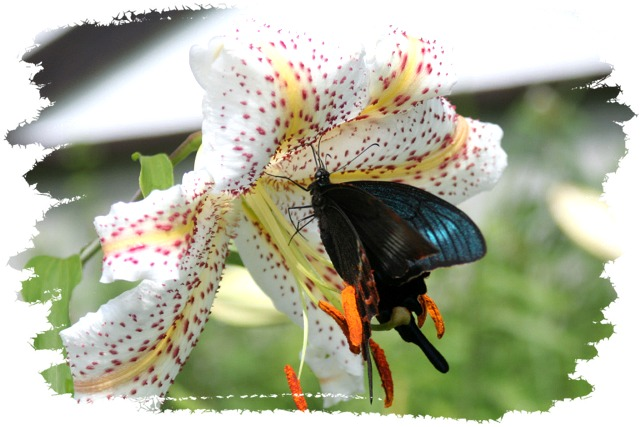 花だより XVII_d0012134_2356294.jpg
