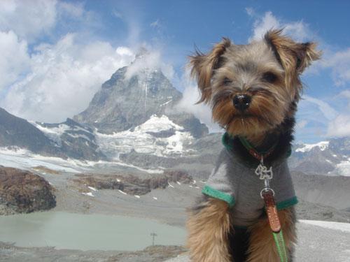 スイス&フランス旅行 ~ツェルマット(Zermatt)Ⅱ~_c0024345_612792.jpg