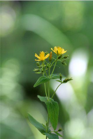 花だより XVII_d0012134_0214848.jpg