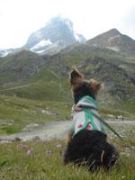 スイス&フランス旅行 ~ツェルマット(Zermatt)Ⅲ~_c0024345_19231325.jpg
