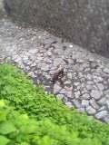 川のお水がなくなりました。_d0035397_1339323.jpg