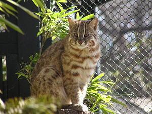 山猫を飼いならす話_e0023828_175536.jpg