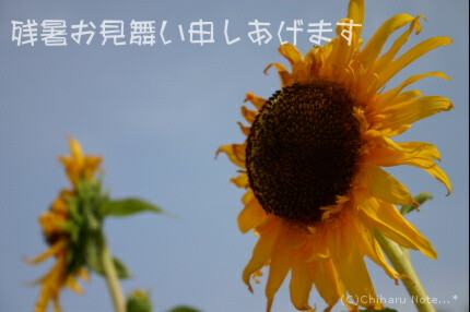 c0046340_14355027.jpg