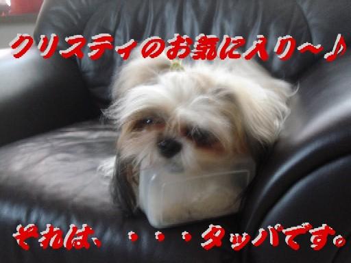 c0038983_12502032.jpg