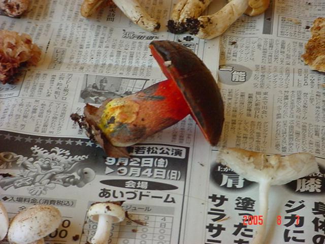 キノコ講習会_d0027486_2314826.jpg