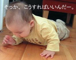 ハイハイ_b0027781_1591045.jpg