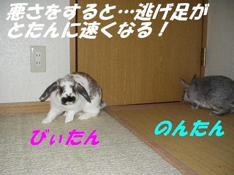 d0032004_0331762.jpg