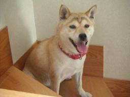 久々の室内犬気分~♪_c0049950_2144698.jpg