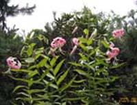 花と風鈴_d0026905_13336.jpg