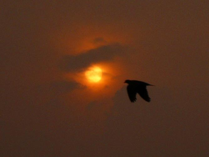 Cloudy Rising Sun 05.08.12_c0030874_72877.jpg