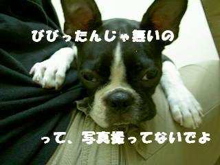e0039002_104566.jpg