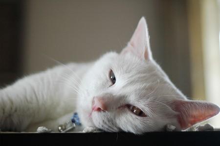猫との暮らし記念日_a0020021_20234913.jpg