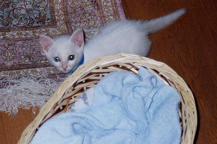 猫との暮らし記念日_a0020021_20484692.jpg