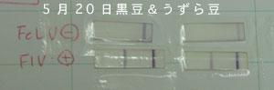 b0065666_1723617.jpg