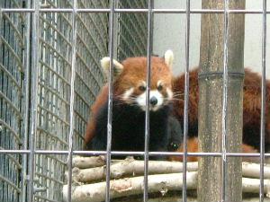 旭山動物園_e0012815_21515975.jpg